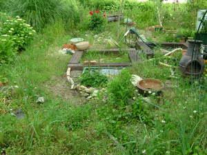 池の周り(Before)