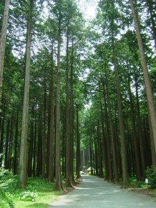 秩父宮記念公園(森のエントランス)
