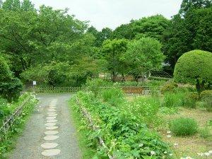秩父宮記念公園(野草の庭)