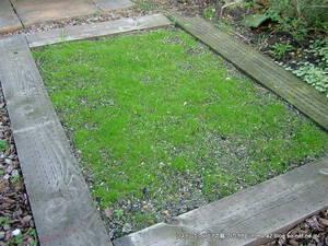 バックヤードの芝生