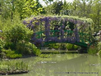 太鼓橋のフジ。花美の庭(水の庭)